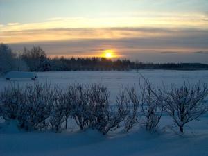 vinterikrombi